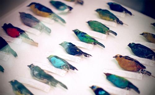 BIRD-DNA